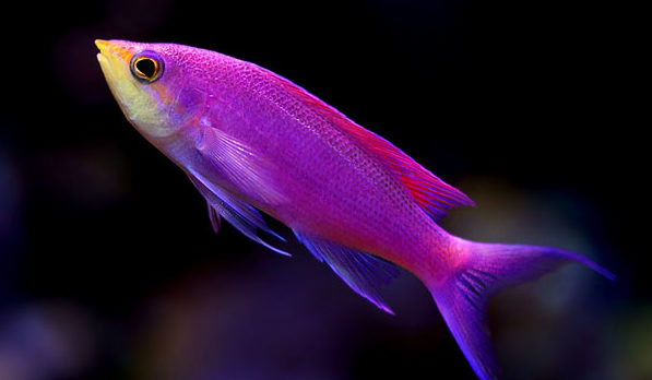 沖繩潛水推薦魚類