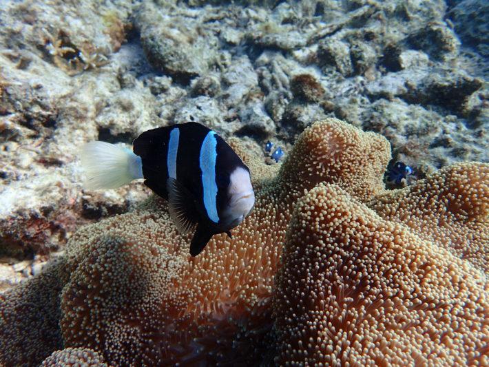 沖繩 考潛水 PADI 執照 青洞
