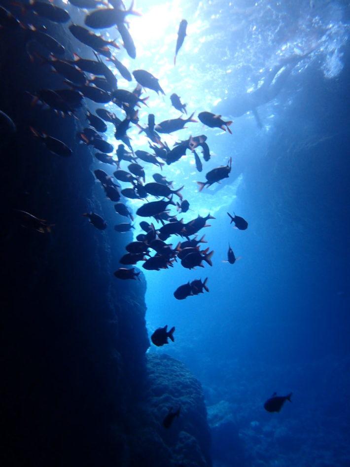 沖繩 FUN DIVE 潛水