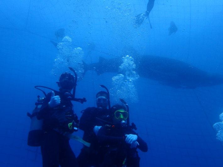 沖繩潛水FunDive鯨鯊