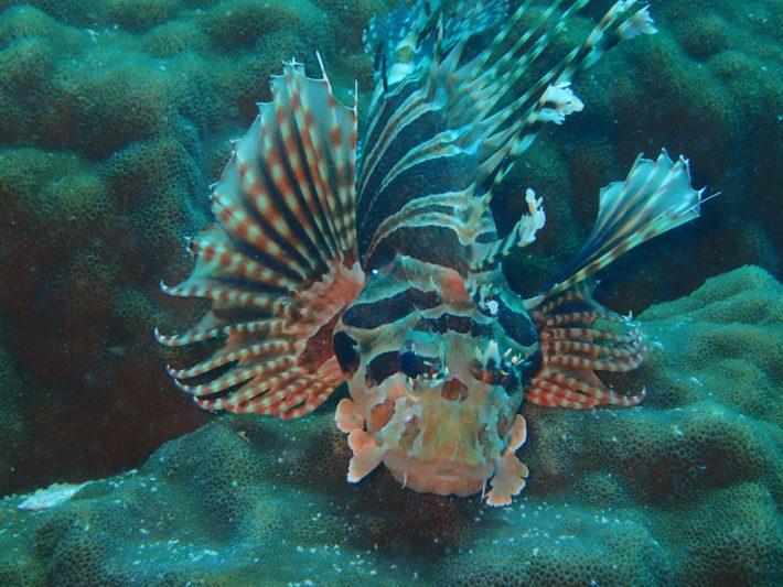 青之洞窟 潛水執照 沖繩