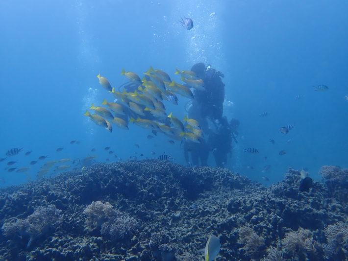 沖繩 潛水 證照 中文
