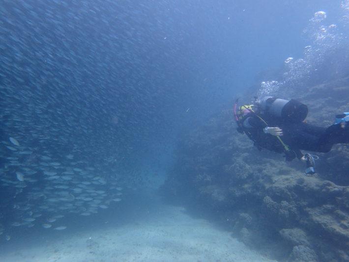 沖繩 潛水 浮潛 中文